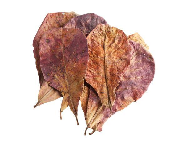 Natural Terminalia Catappa Leaves For Aquarium