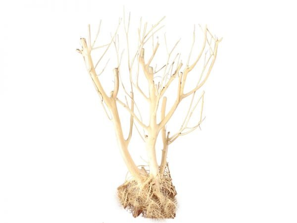 Aquarium Driftwood Moss Tree